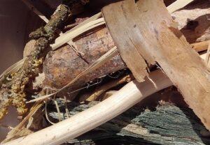 Naturfunde Holz und Rinden
